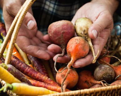 hands holding beets