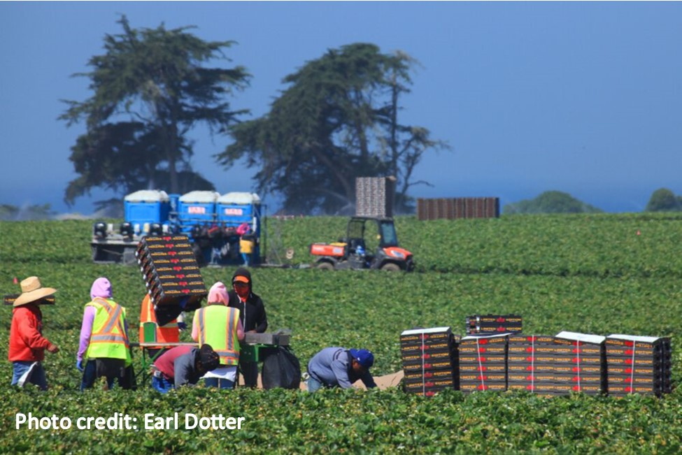 Strawberry_workers_credit_Earl_Dotter
